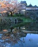 Japansk körsbärsröd blomning och slott på skymning Royaltyfri Bild