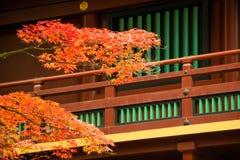 Japansk lönnlöv på filialhöst på Nikko Royaltyfri Foto