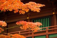 Japansk lönnlöv på filialhöst på Nikko Royaltyfri Bild