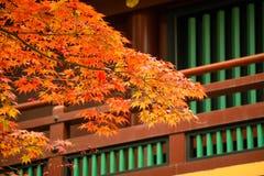 Japansk lönnlöv på filialhöst på Nikko Fotografering för Bildbyråer