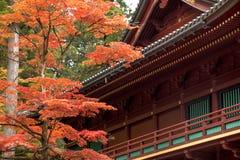 Japansk lönnlöv på filialhöst på Nikko Arkivbild