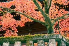 Japansk lönnlöv på filialhöst på Nikko Arkivbilder