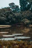 Japansk lagun arkivfoton