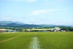 Japansk lantgård Royaltyfri Bild