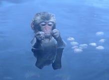 Japansk Macaque i Nagano Arkivfoton