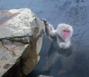 Japansk Macaque i Nagano Royaltyfri Bild