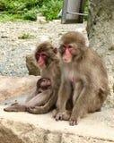 Japansk Macaquefamilj i Izu Peninsula arkivfoto