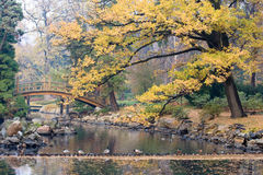 japansk park Royaltyfri Fotografi
