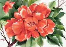 japansk quince Fotografering för Bildbyråer