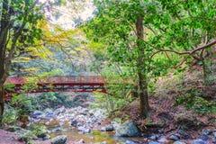 Japansk röd bro i skogen Royaltyfria Foton