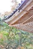 Japansk regnkedja, kusaritoi, under ett ljust regn Royaltyfri Fotografi