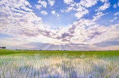 Japansk risfält som bedövar himmel royaltyfria bilder