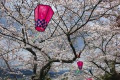 Japansk sakura blomning och rosa lyktor royaltyfria foton