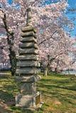 Japansk stenpagod bland körsbärsröda blomningar Royaltyfri Bild