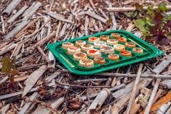Japansk sushi i den kasserade asken Arkivfoton