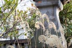 Japansk tempeling?ng arkivbilder