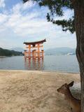 japansk torii Royaltyfri Foto