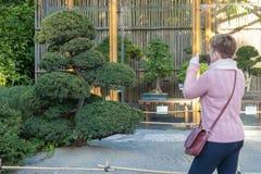 Japansk trädgård i den Budapest zoo arkivfoto