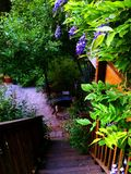 Japansk trädgård i min trädgård i Santa Cruz royaltyfri fotografi