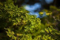 Japansk växt i trädgård Royaltyfria Foton