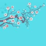 Japansk vår körsbärsröda blomningar. Arkivbilder