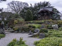 Japansk vinter för nyckelKew trädgårdar Royaltyfri Foto