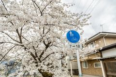 Japanska Cherry Blossom, alpin stad, scenisk fläck för ditt namn royaltyfria bilder