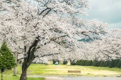 Japanska Cherry Blossom, alpin stad, scenisk fläck för ditt namn arkivfoton