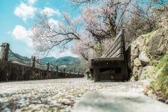 Japanska Cherry Blossom, alpin stad, scenisk fläck för ditt namn fotografering för bildbyråer