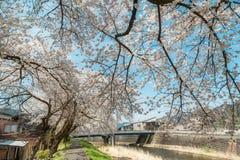 Japanska Cherry Blossom, alpin stad, scenisk fläck för ditt namn arkivbild