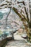 Japanska Cherry Blossom, alpin stad, scenisk fläck för ditt namn royaltyfri fotografi