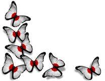Japanska flaggafjärilar på vit bakgrund Arkivfoton