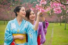 Japanska flickor tycker om trädet för körsbärsröda blomningar Royaltyfri Fotografi