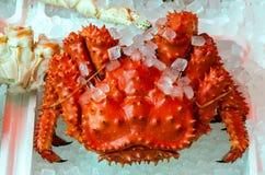 Japanska håriga krabbor Arkivfoto