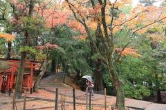 Japanska lyktor på Nara Park Royaltyfria Bilder