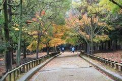Japanska lyktor på Nara Park Arkivbild