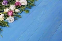 Japanska rosor i det övre vänstra hörnet på en blå träbakgrund Royaltyfri Fotografi