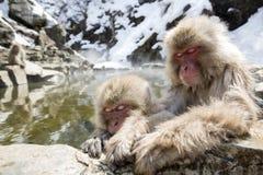 Japanska snowapor Arkivbilder