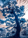 Japanska trädgårdar Fotografering för Bildbyråer