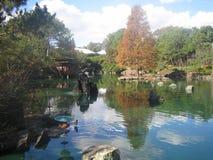 Japanska trädgårdar Sydney Arkivbilder