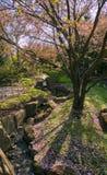 Japanska växter är lönn, blomningskogskornell, lavendelljung Arkivbilder