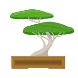 Japanskt bonsaiträd på isolerad vit bakgrund också vektor för coreldrawillustration Royaltyfri Bild