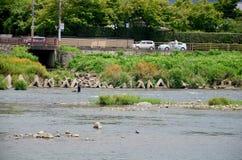 Japanskt folk som fiskar fisken på den Hozugawa floden av Arashiyama Fotografering för Bildbyråer