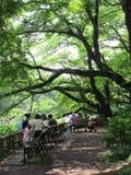 Japanskt folk som placerar under det stora trädet Royaltyfria Bilder