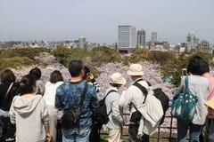 Japanskt folk som ser den körsbärsröda blomningen i Japan Royaltyfri Bild