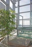 japanskt modernt tema för växthus Arkivbild