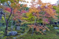 Japanskt träd för röd lönn under höst i trädgård på den Enkoji templet i Kyoto, Japan Royaltyfria Foton