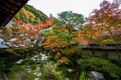 Japanträdgård. royaltyfri bild