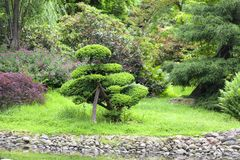 Japanträdgård, exotiska växter, vår, Wroclaw, Polen Arkivbilder