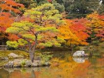 Japanträdgård i höst Arkivbilder